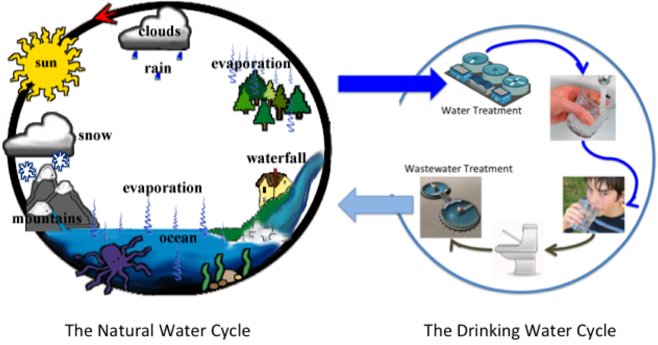 "the ""drinking water cycle"" is right 