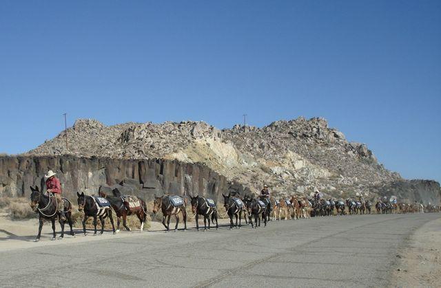 Intro 100 mules